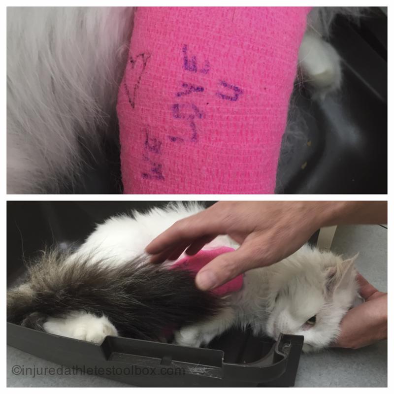 injured cat broken leg