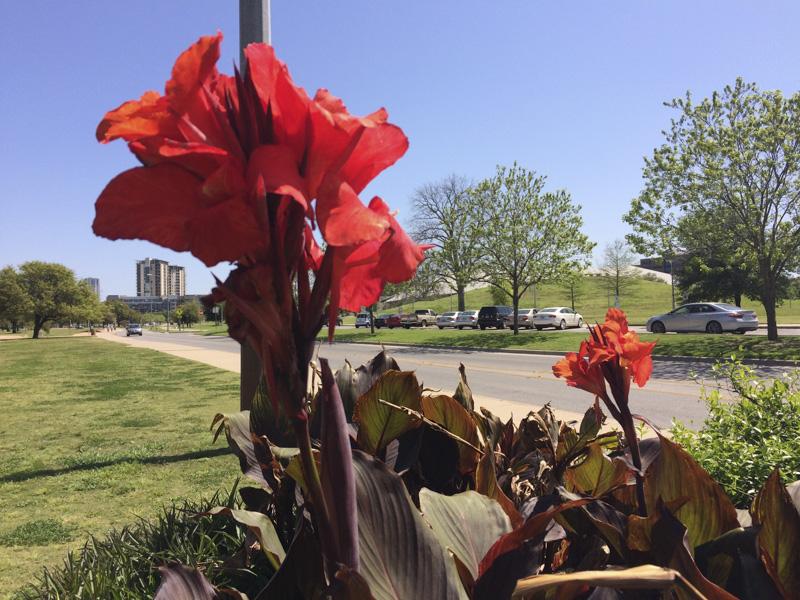 Spring in Austin
