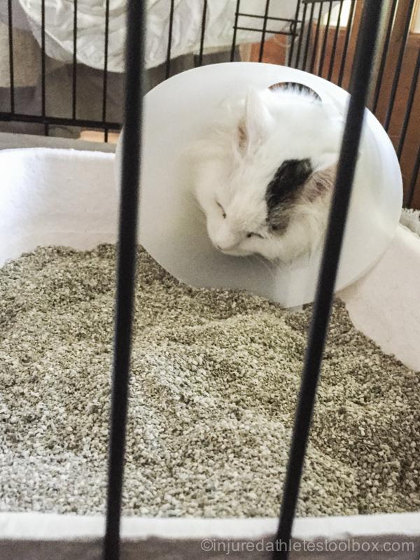 cat sleeping in liter box